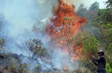 Hóa vàng có thể là nguyên nhân vụ cháy dữ dội tại Bình Định