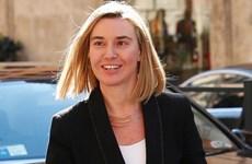 Ngoại trưởng Italy vẫn là ứng viên tiềm năng thay thế bà Ashton
