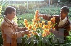 Ra mắt Quỹ hỗ trợ nông dân Đà Lạt trồng hoa xuất khẩu