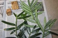 Phát hiện hàng chục loài động, thực vật có trong sách đỏ thế giới