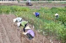 Tiến sỹ Hà Thị Thúy - Nhà khoa học của người nông dân
