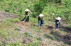 Thừa Thiên-Huế trồng mới 4.500ha rừng bằng nuôi cấy mô
