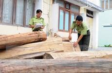 Bắt giữ 4 xe công nông độ chế vận chuyển trái phép 10m3 gỗ lậu