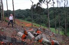 Vụ lâm tặc xẻ thịt rừng: Khu vực bị khai thác trái phép thuộc Gia Lai