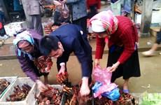 Lào Cai: Các loại hoa, củ dùng ngâm rượu được bày bán tràn lan