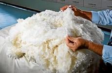 Australia ưu tiên mở rộng thị trường xuất khẩu len sang Việt Nam