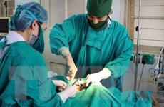 Lào Cai: Nối thành công động mạch tay bị đứt do khỉ độc cắn
