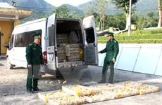 Bắc Giang bắt giữ xe vận chuyển 1.000 con gia cầm giống nhập lậu