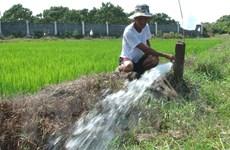 """Quảng Trị: Cơn mưa """"vàng"""" giúp hàng chục nghìn ha ruộng đỡ khát"""