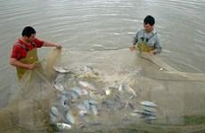 Tình hình sản xuất thủy sản sẽ tiếp tục đối mặt với khó khăn