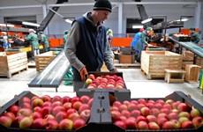 Italy thu 100 triệu euro của mafia kiểm soát phân phối nông sản
