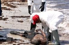 Phát hiện thêm 37 thi thể người di cư trong vụ đắm thuyền ở Libya