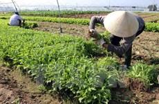 Không có bất thường về dùng thuốc bảo vệ thực vật ở Phú Thọ