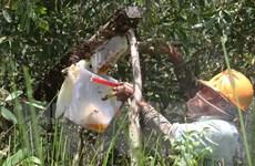 Bệnh viện đa khoa Lai Châu cấp cứu 5 người bị ong rừng đốt