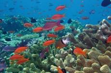 Cảnh báo nguy cơ biến mất các rạn san hô tại biển Panama