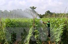 Sản xuất rau an toàn tại Hà Nội hiệu quả hơn rau thường 20%