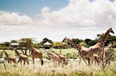 Khai trương Công viên bảo tồn động vật Vinpearl Safari Phú Quốc
