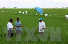 Áp dụng bộ tiêu chí sản xuất lúa gạo bền vững quốc tế tại Việt Nam
