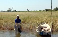 Cấp bách chống hạn, xâm nhập mặn vùng Đồng bằng sông Cửu Long