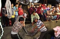Ngư dân Quảng Trị trúng lớn cá bè quỵt 10 năm mới xuất hiện