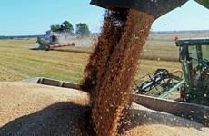 Nga vượt Mỹ và Canada trở thành nước dẫn đầu xuất khẩu lúa mỳ