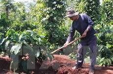 Gia Lai xây dựng cánh đồng lớn cho 5 loại cây trồng chính
