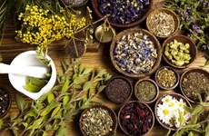 6 sản phẩm chiết xuất thảo dược có công dụng vượt trội cho làn da