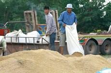 Thái Lan bán 1 triệu tấn gạo trong đợt đấu thầu đầu tiên của năm