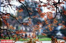 [Photo] Hà Nội đẹp dịu dàng và thơ mộng trong khoảnh khắc giao mùa