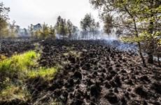 Cháy lớn tại khu dự trữ sinh quyển tại miền Nam Hà Lan