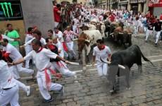 Hơn 50 người bị thương trong lễ hội rượt bò San Fermin ở Tây Ban Nha