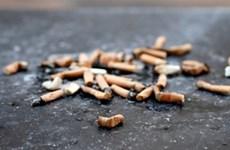 Sử dụng đầu lọc thuốc lá làm vật liệu xây dựng đường sá