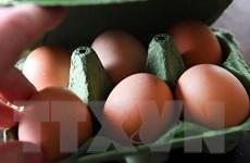 """Bê bối trứng """"bẩn"""" tại châu Âu tiếp tục lan rộng sang châu Á"""
