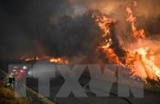 Chính phủ Bồ Đào Nha yêu cầu châu Âu hỗ trợ dập tắt cháy rừng
