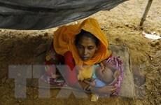 Australia cam kết viện trợ 5 triệu AUD cho người Rohingya