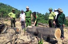 Vụ phá rừng tại Bình Định: Có biểu hiện xử lý nhùng nhằng, né tránh