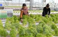 Ăn nhiều rau xanh giúp ngăn chặn chứng mất trí nhớ ở tuổi già