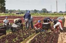 Nông dân Anh sẽ phải cạnh tranh để có được tài trợ từ chính phủ