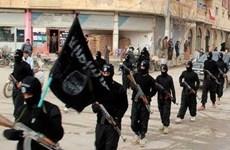 Afghanistan bắt giữ thủ lĩnh chủ chốt của IS tại miền Bắc