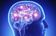 Não bộ người có thể sản sinh tế bào thần kinh mới tới tuổi 80