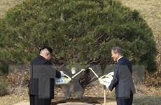 Phản ứng của cộng đồng quốc tế về cuộc gặp thượng đỉnh liên Triều