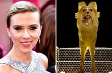 Loạt sao hạng A Hollywood tề tựu trong phim hoạt hình về các chú chó