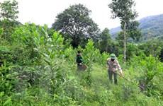 Bà Rịa-Vũng Tàu lập đoàn xử lý giao khoán đất rừng sản xuất