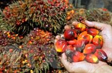 Malaysia muốn cùng Indonesia đối phó việc EU cấm nhập dầu cọ