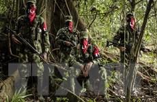 ELN từ chối ký thỏa thuận ngừng bắn với Chính phủ Colombia