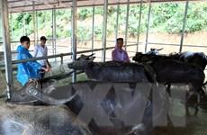 Hà Nội phòng chống nắng nóng đảm bảo sản xuất nông nghiệp