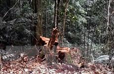 [Video] Phát hiện vụ phá rừng phòng hộ quy mô lớn ở Bình Định