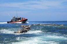 Mexico phát hiện hàng trăm rùa biển Golfinas chết trôi tại bờ biển