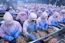 Doanh nghiệp Việt Nam nắm bắt cơ hội tiến vào thị trường châu Phi