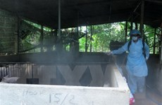 Hà Nội thông tin về giải pháp ngăn chặn dịch tả lợn châu Phi từ xa